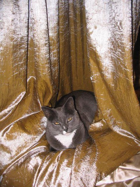 Henry, Curtain Arranger